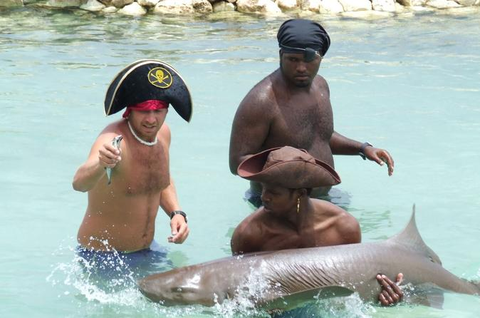The-swim-hold-and-feed-the-sharks-program-in-ocho-rios-141628