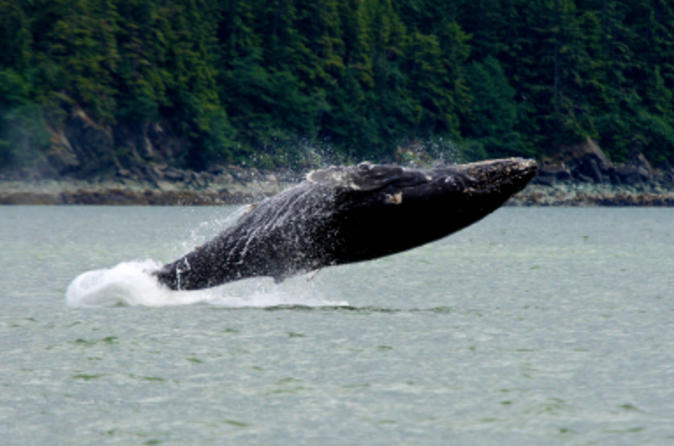 Juneau-shore-excursion-whale-watching-adventure-with-mendenhall-in-juneau-49316