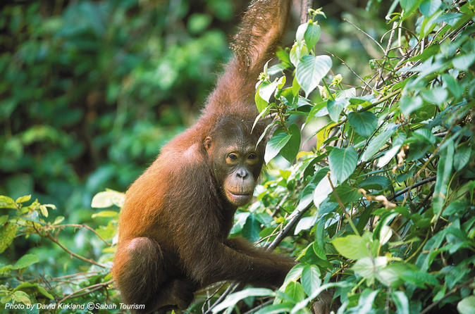 2-day-small-group-tour-sandakan-city-and-wildlife-experience-from-in-sabah-113537