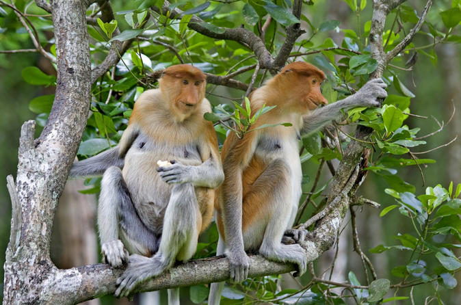Langkawi-mangrove-forest-and-eagle-watching-tour-in-langkawi-139554