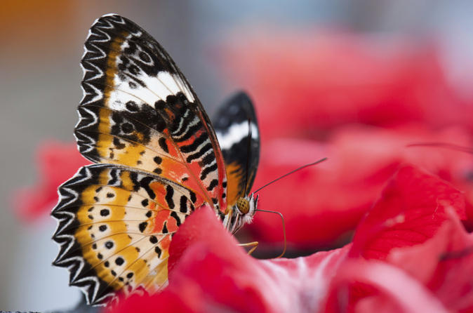 Penang-butterfly-farm-half-day-tour-in-penang-139574