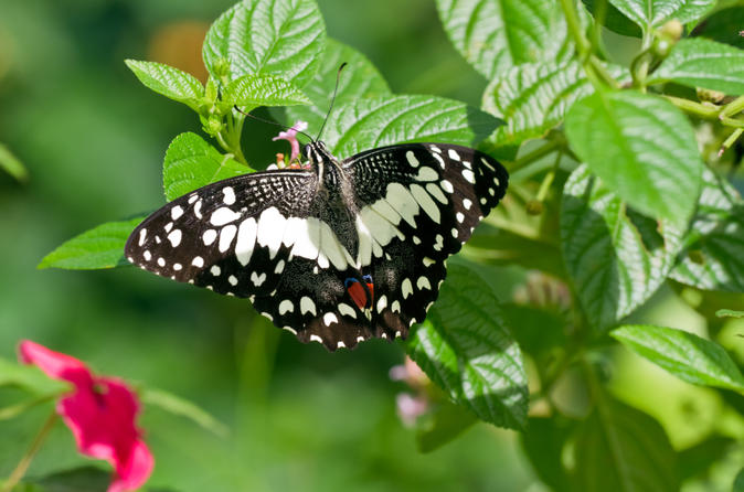 Private-tour-kuala-lumpur-nature-in-the-city-tour-including-butterfly-in-kuala-lumpur-139556