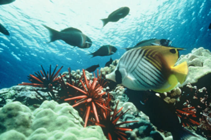 Grand-cayman-shore-excursion-semi-submarine-and-fish-feeding-show-in-george-town-45133
