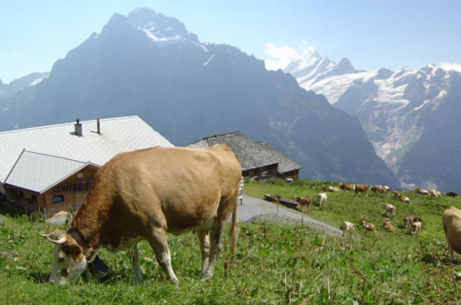 Switzerland-countryside-and-traditions-tour-from-zurich-in-zurich-137553