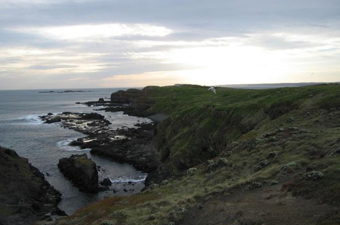 Phillip-island-ultimate-penguin-eco-tour-or-skybox-experience-in-phillip-island-117249