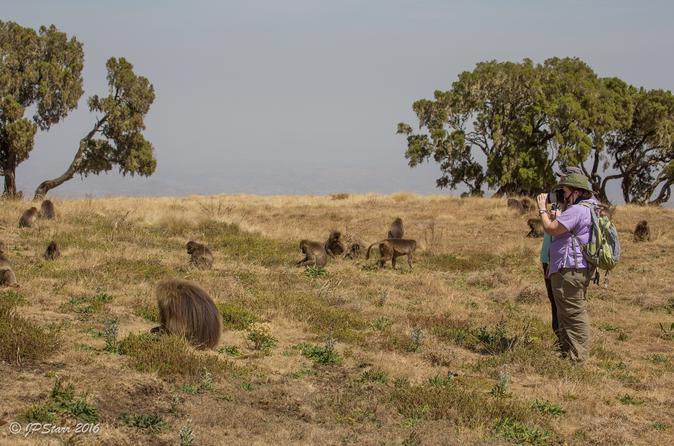 Guided Day Trip: Nature and Wildlife including Debre Libanos Monastery from Addis Ababa