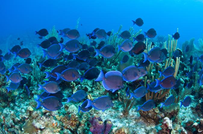 Glass-bottom-boat-cruise-at-buccoo-reef-in-scarborough-152058