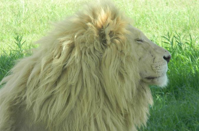Lion Park Half-Day Tour from Johannesburg and Pretoria
