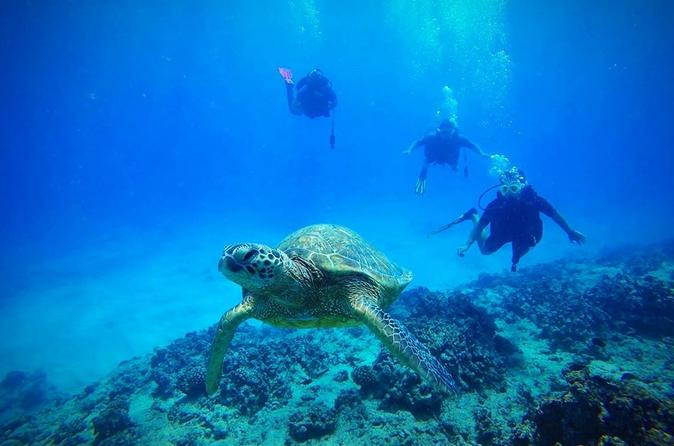 2-Tank Deep Wreck and Shallow Reef Dives from Waikiki