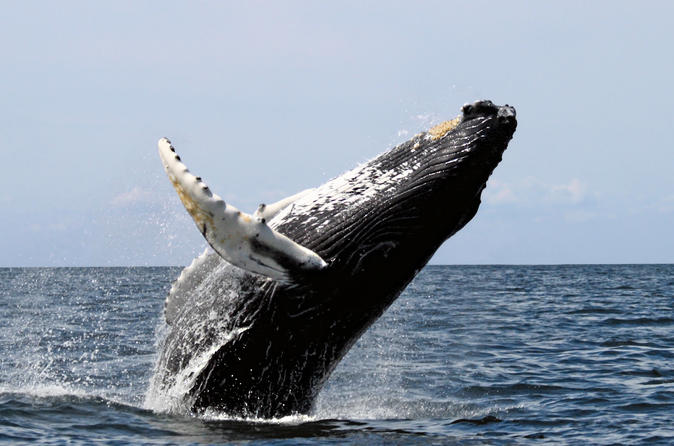 San Diego Whale Watching Sailboat Cruise