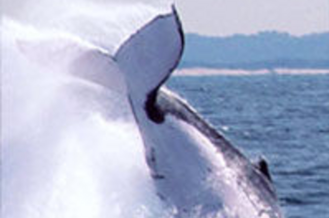 Half-day-whale-watching-and-canal-cruise-from-the-gold-coast-in-gold-coast-40848