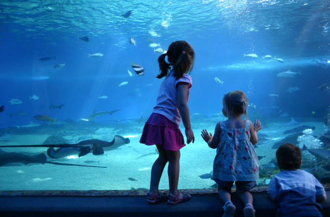 Skip-the-line-sea-life-london-aquarium-in-london-132227