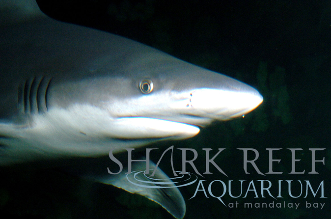 Shark Reef en el Mandalay Bay Hotel and Casino