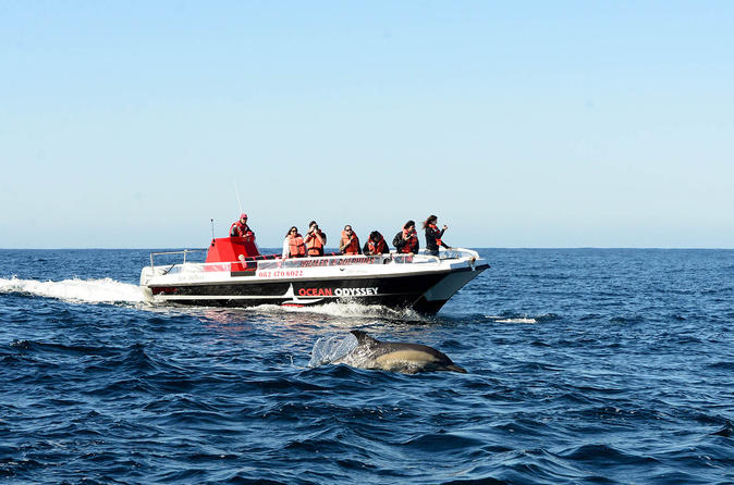 Close encounter whale and dolphin watching