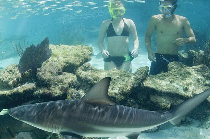 Swimming-with-sharks-at-coral-world-ocean-park-in-st-thomas-43526