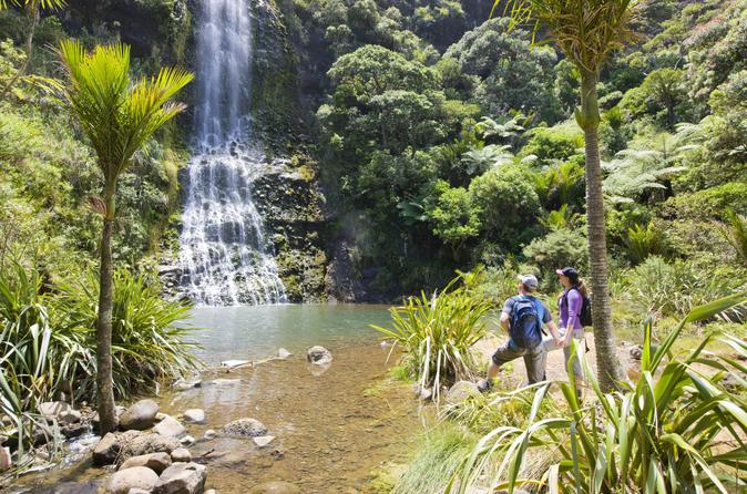 Waitakere-ranges-guided-walk-from-auckland-in-auckland-131873