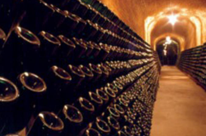 Cavas-freixenet-wine-tour-from-mexico-city-in-mexico-city-104523
