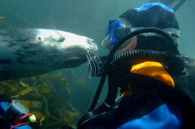 Puerto-madryn-shore-excursion-scuba-dive-with-sea-lions-in-buenos-aires-117932