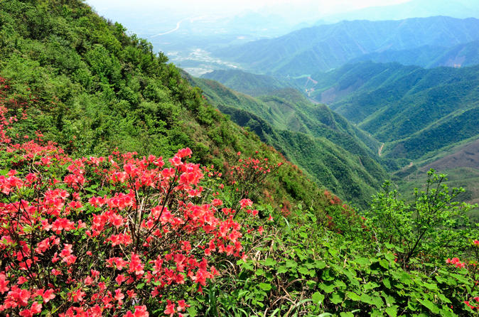Private-tour-yao-mountain-and-tea-plantation-from-guilin-in-guilin-120285