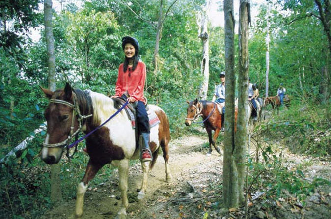 Horse-riding-tour-from-cairns-in-cairns-106505