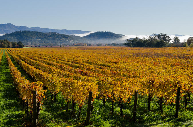 San-francisco-shore-excursion-private-tour-to-wine-country-by-luxury-in-san-francisco-152487