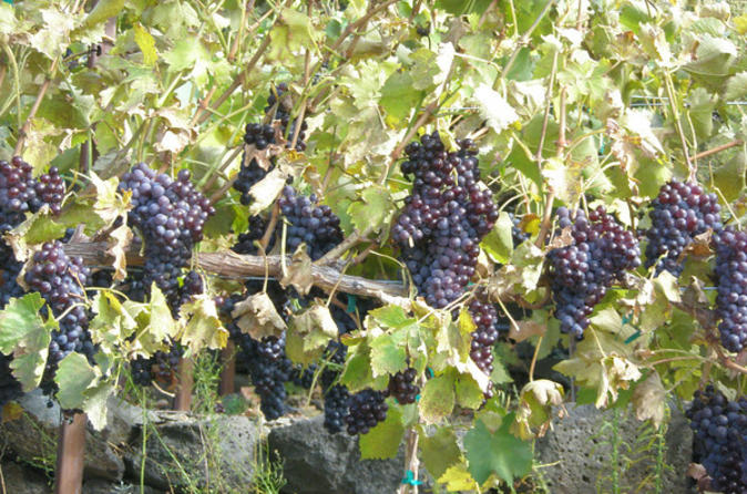 Seattle-shore-excursion-small-group-wine-tasting-tour-through-in-seattle-105204