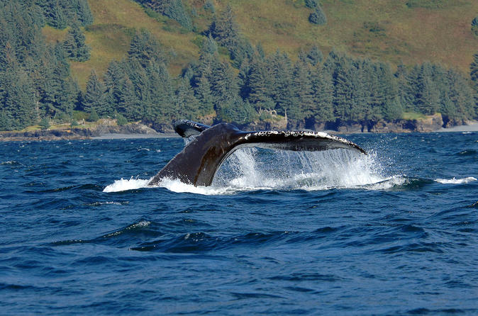 Juneau-shore-excursion-whale-watching-adventure-in-juneau-108080