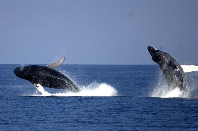 Whale-watching-cruise-from-newport-beach-in-anaheim-buena-park-151044