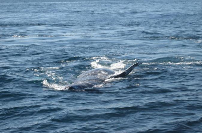 San Diego Half-Day Marine Wildlife Tour with Lunch
