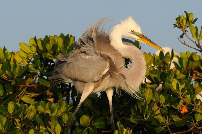 Small-group-wildlife-boat-tour-in-florida-everglades-national-park-in-fort-myers-113206