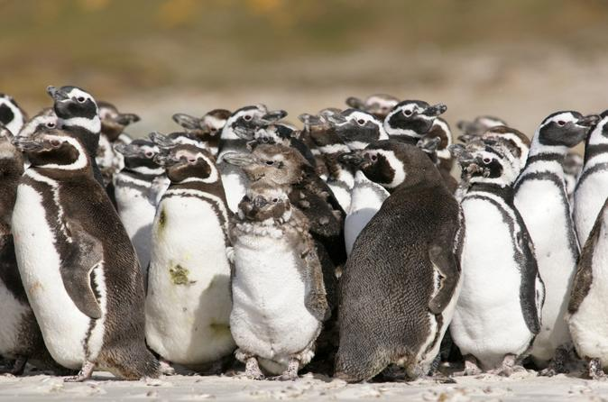 Puerto-madryn-shore-excursion-private-day-trip-to-punta-tombo-penguin-in-puerto-madryn-123351