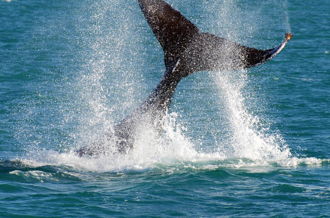 Whale-watching-cruise-and-hillarys-boat-harbour-day-trip-from-perth-in-perth-118758
