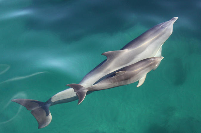 Dolphin-cruise-from-adelaide-with-optional-dolphin-swim-in-adelaide-118655