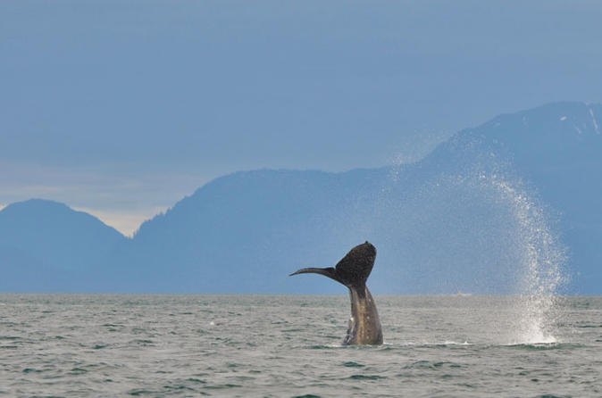 Juneau-shore-excursion-mendenhall-glacier-whale-watching-cruise-and-in-juneau-132220
