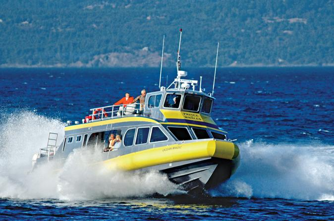 Whale-watching-cruise-from-vancouver-to-victoria-in-vancouver-128767