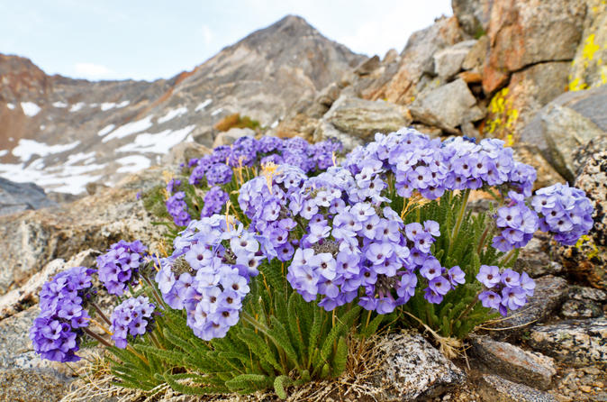 Private-tour-yosemite-wildflower-hike-in-yosemite-145685