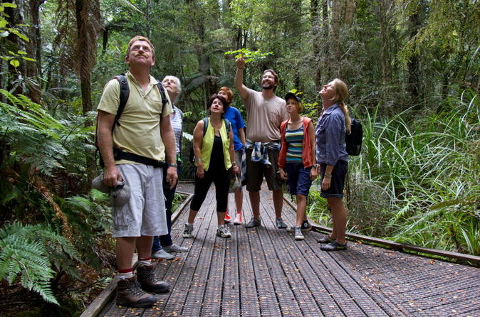 Bay-of-islands-shore-excursion-puketi-rainforest-guided-walk-in-bay-of-islands-143588