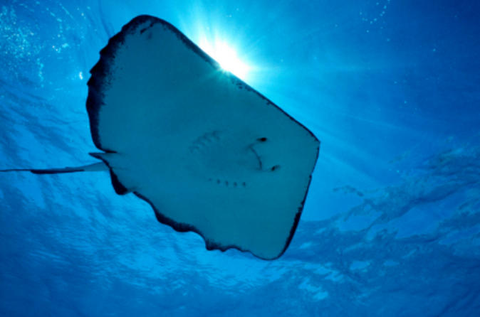 Gibbs-cay-stingray-and-snorkel-adventure-in-grand-turk-in-grand-turk-142382