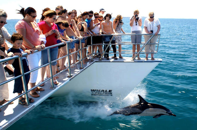 Auckland Dolphin and Whale Watching Cruise