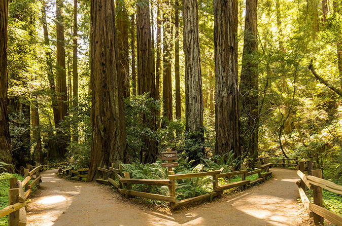 Woods and Wine: Half Day Sonoma Wine Tour plus Muir Woods National Park
