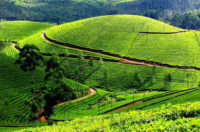 Best of Kerala Private Tour ( 6 Nights and 7 Days )