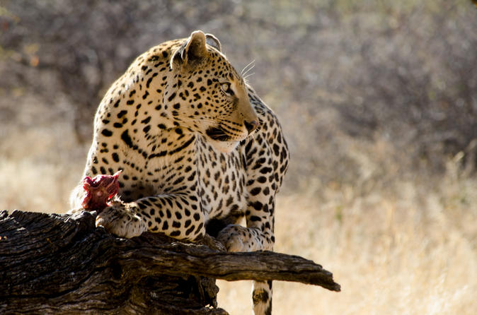 10-Day Namibian Explorer from Windhoek