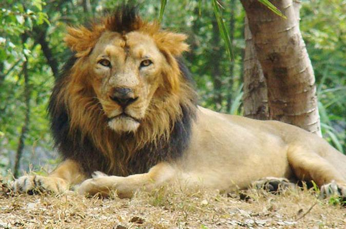 6-Day Wildlife Tour of Gujarat from Ahmedabad