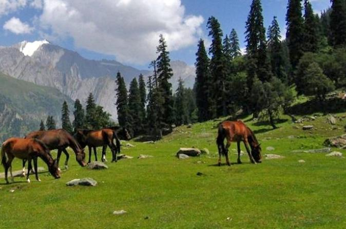 Full-Day Private Trip to Thajiwas Glacier and Zero Point from Srinagar