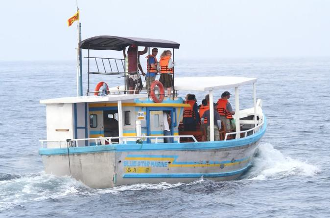 Deep Sea Fishing and Whale Watching Day Trip