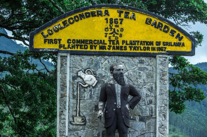 Private Tea Tour to the James Taylors Loolkandura Estate from Kandy