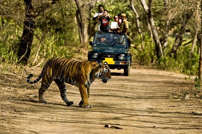 Private 5-Day Ranthambhore Tiger Tour with Agra, Jaipur
