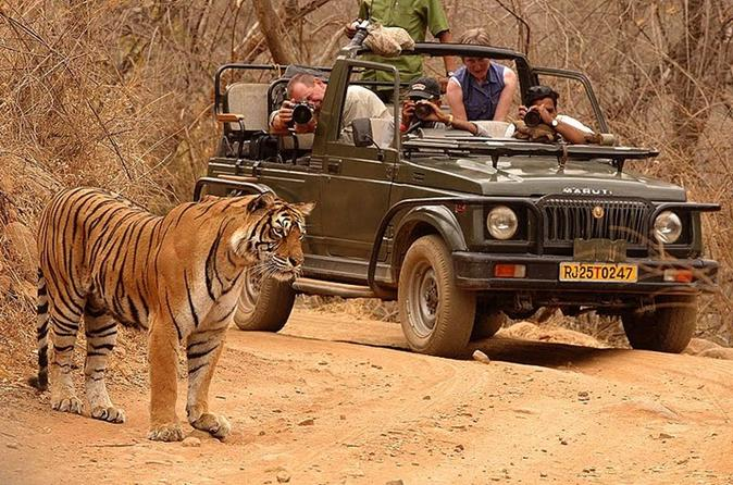 Private Tour: 2-Day Ranthambore National Park from Jaipur