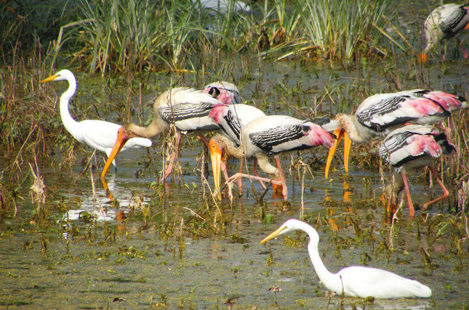 Day Trip to Bharatpur Keoladeo National Park and Abhaneri Stepwellfrom Agra Including Transfer toJaipur