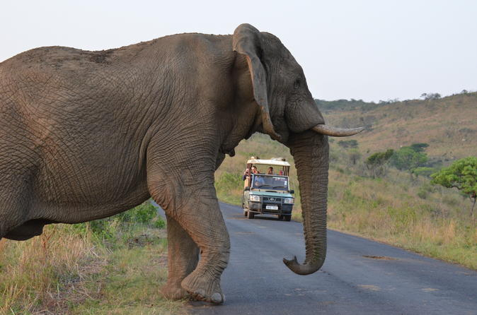 Hluhluwe Imfolozi Game Reserve Day Tour from Durban